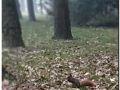 ulubiona-dycha-2013-151