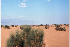 20050829-Bayanlig-Agul (11)