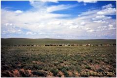 20050902-erdenedalay-Khukh Burd Sum (2)