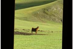 20050904-turk-kazach (40)