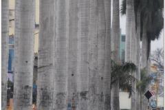 Peru 20070722 Lima (41)