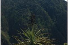 Peru 20070729 Machu Picchu (174)