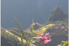 Peru 20070729 Machu Picchu (225)