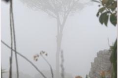 Peru 20070729 Machu Picchu (37)