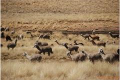 Peru 20070730 Cuzco-Puno (23)