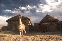 Peru 20070731 Puno Sillustani (63)