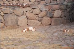 Peru 20070731 Puno Sillustani (78)