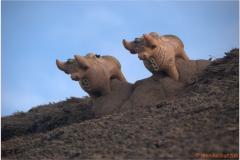 Peru 20070731 Puno Sillustani (81)