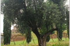 Italia20080522 (6)