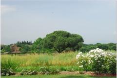 Italia20080529 appia (31)