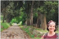 Italia20080529 appia (49)kdr