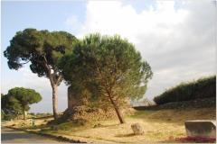 Italia20080529 appia (77)