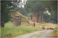 Italia20080529 appia (86)