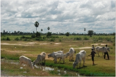 20081119 Kambodza Phnom Penh (85)