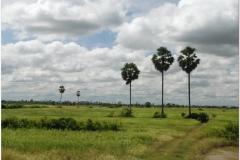 20081119 Kambodza Phnom Penh (88)b