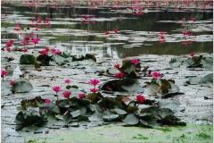 20081121 Kambodza - Siem Reap (134)