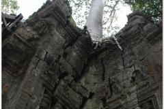 20081121 Kambodza - Siem Reap (250)