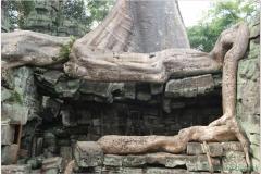 20081121 Kambodza - Siem Reap (267)