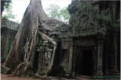 20081121 Kambodza - Siem Reap (269)