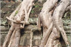 20081121 Kambodza - Siem Reap (281)