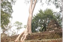 20081121 Kambodza - Siem Reap (289)