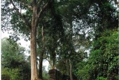20081122 Kambodza - Siem Reap (138)