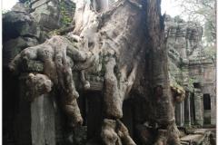 20081122 Kambodza - Siem Reap (86)