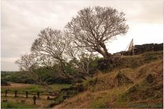 20081124 Kambodza - Laos Pakse-Champasak (85)