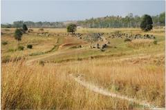 20081128 Laos Ponsavanh (11)