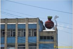20090913 Addis 1 - Taitu (11)