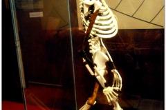 20090913 Addis 2 - Muzeum Narodowe (17)b