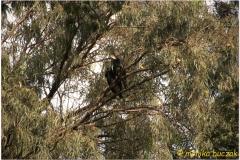 20090915 Bahar Dar - jez Tana (138)