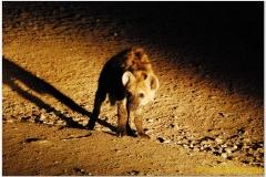20090924 Harar (165)