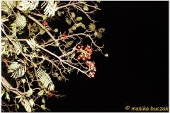 20091001 Jinka-Key Afar-Arba Minch (151)