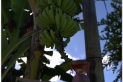 20111119 Baracoa (12)