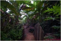 20111119 Baracoa (99)
