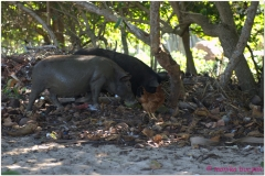 20111120 Baracoa-Maguana (12)