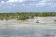20111127 Kuba Zapata-Playa Larga (19)