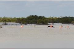 20111127 Kuba Zapata-Playa Larga (34)