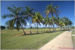 20111128 Kuba Playa Larga (54)