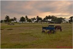 20111129 Kuba Playa Larga (8)