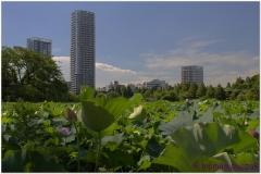 20120823 Japonia Tokio (22)And1more_fused