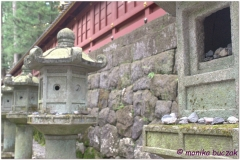 20120828 Japonia Nikko (92)