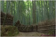 20120831 Japonia Kioto (133)