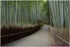 20120831 Japonia Kioto (135)