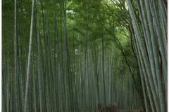 20120831 Japonia Kioto (138)