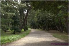 20120903 Japonia Amanohashidate (25)
