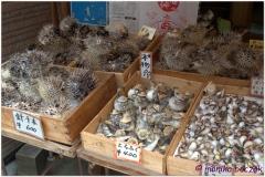 20120903 Japonia Amanohashidate (73)