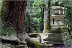 20120905 Japonia Nara (104)