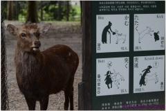 20120905 Japonia Nara (107)